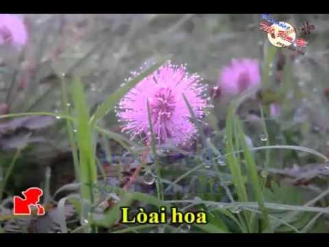 karaoke tanco Hoa Trinh Nu - ca voi 545.mp4