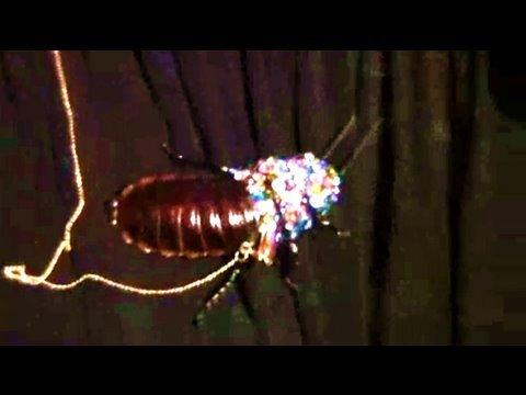 Live Hissing Rhinestone Cockroach Jared Gold