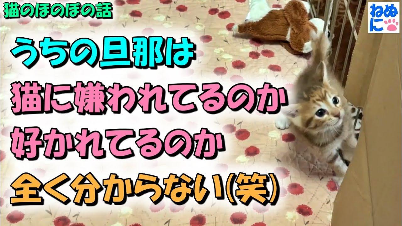【猫のほのぼの話】うちの旦那は、猫に嫌われてるのか好かれてるのか全く分からない(笑)