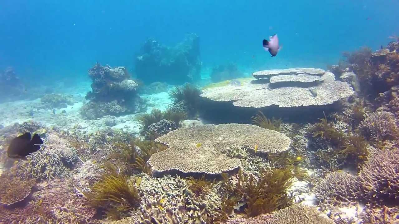 diving in blue lagoon padang bai bali may 2012 youtube. Black Bedroom Furniture Sets. Home Design Ideas