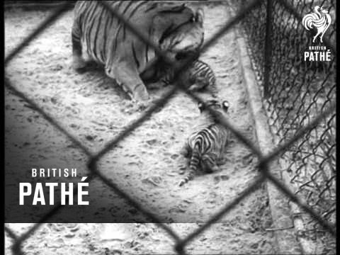 Holland - Quads For Zoo Tiger (1965)