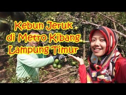 Kebun Jeruk Metro Bandar Lampung