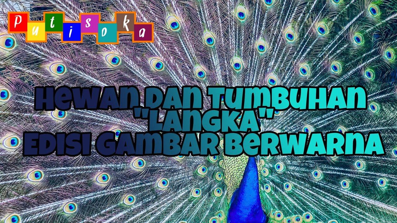Hewan Dan Tumbuhan Langka Di Indonesia Versi Putisokaofficial Youtube
