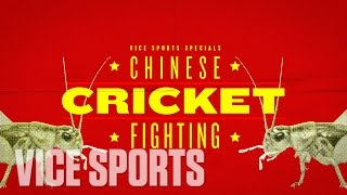 A Day of Cricket Fighting In Beijing: VICE Sports Specials