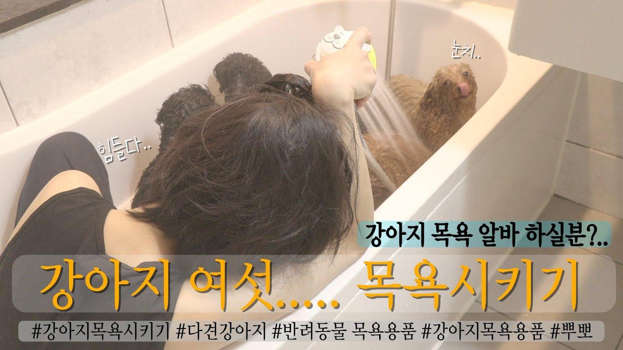 Review & Vlog|강아지 여섯...목욕시켜보실분?..😅알바하실분?|강아지목욕|강아지샤워기|강아지용품|강아지수건|강아지비누