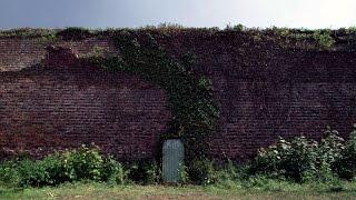 За стеной