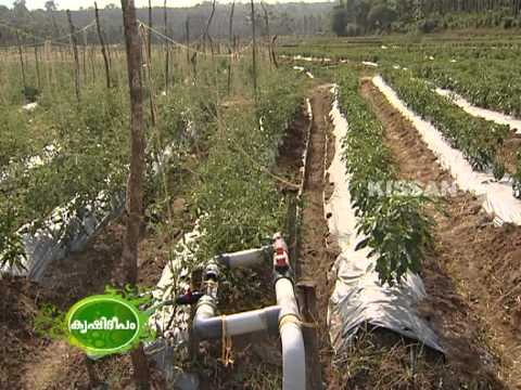 Hi-Tech Farming in open field  by a group of farmers in waya