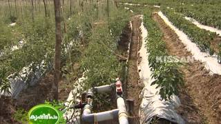 Hi-Tech Farming in open field  by a group of farmers in wayanad : Success Story