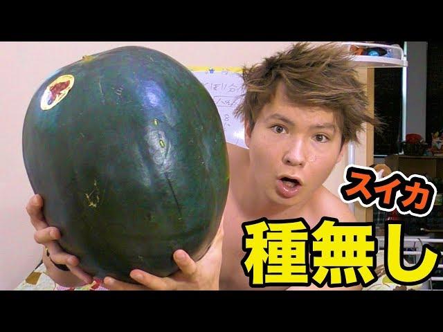 12㎏種無し巨大スイカ初めて食べる!! PDS