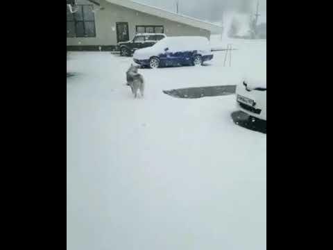 Снег в горах Чечни