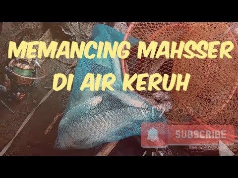 Memancing ikan semah (mahsser) di air keruh