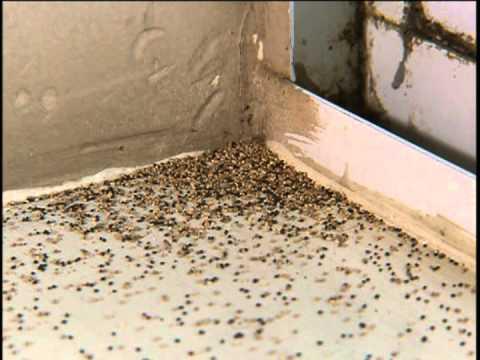 Como eliminar las termitas de mi casa doovi - Como eliminar los mosquitos de mi casa ...