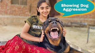 My Rottweiler Showing Aggression||Guard dog breed.