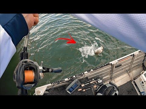 FISHING THE PORT OF BRISBANE | Targeting Multiple Species.