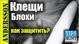 [Охота] Защита собаки от блох и клещей?