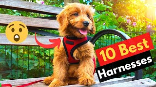 10 Best Harnesses For Golden Retrievers Puppies and Dogs
