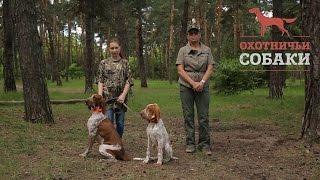Охотничьи собаки. 25 серия. Итальянский бракк