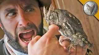 Download SLEEPY OWL BITES ME?!