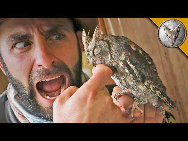SLEEPY OWL BITES ME?!