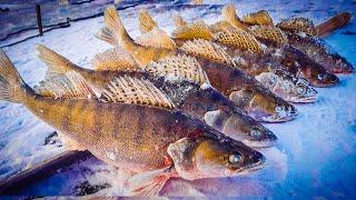 ВОЛШЕБНАЯ ЛУНКА СУДАК ЗИМОЙ ЛОВЛЯ СУДАКА СО ЛЬДА зимняя рыбалка