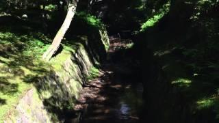 Walking around TsuutenKyo in Tofukuji(東福寺・通天橋)