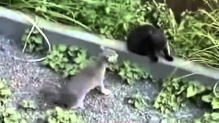 funny videos cats - very dangerous fighting-