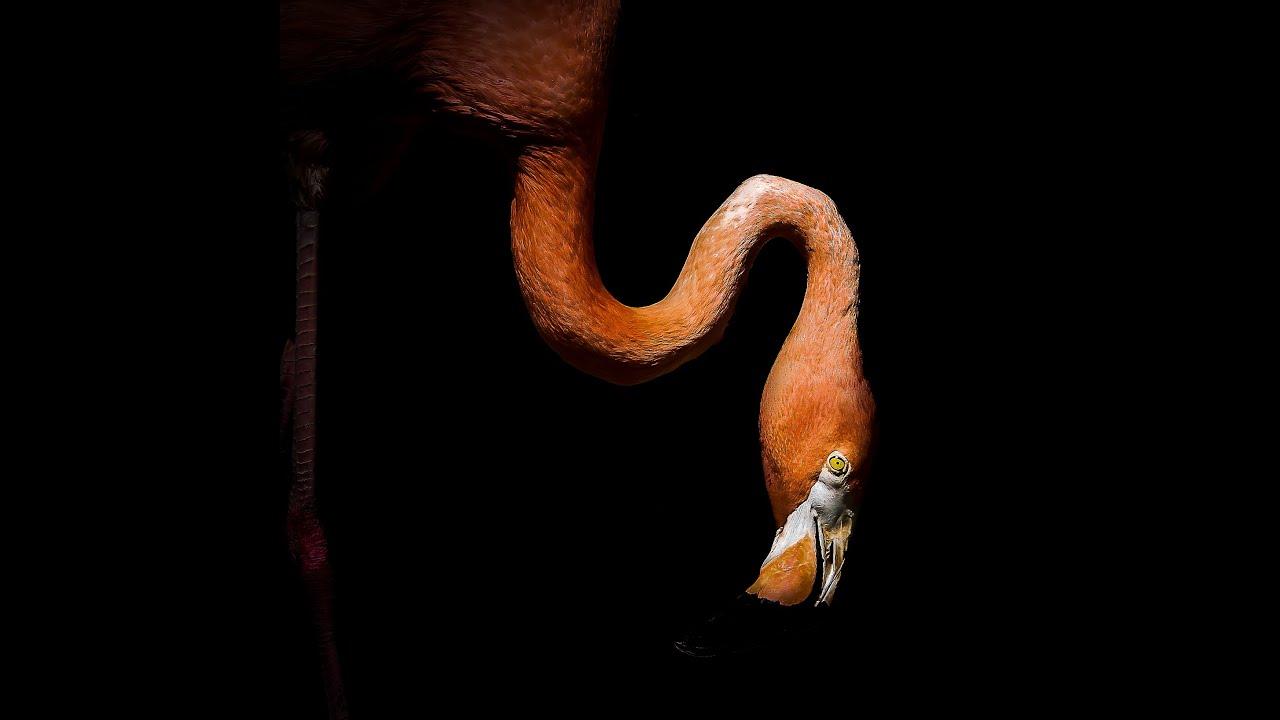 When Is a Flamingo No Longer a Flamingo?