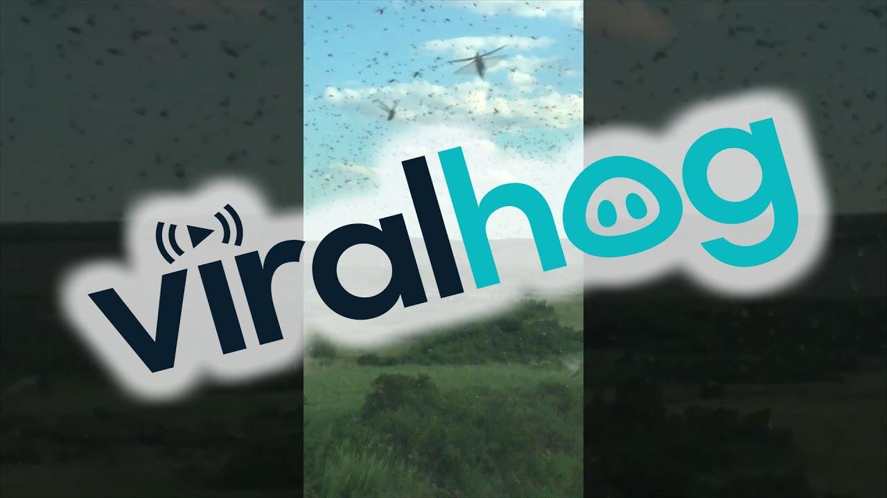 カザフスタンで撮影されたイナゴの映像。その大群の中を突き進むと…