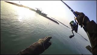 海盜第二章-Quickboats 2015/02/13 蚵棚戰鯛(QB 快特 摺疊船)