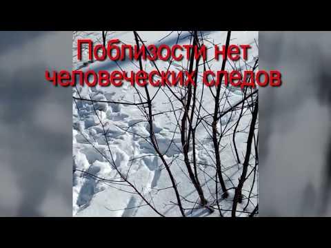 Чупакабра  Что Максим увидел в лесу