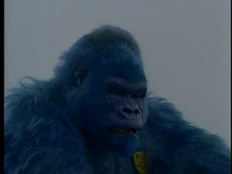 Blue gorilla - photo#5