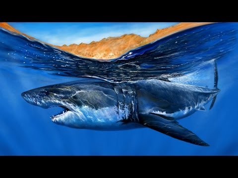 Speed Painting a GREAT WHITE SHARK - YouTube  Great White Shark Painting