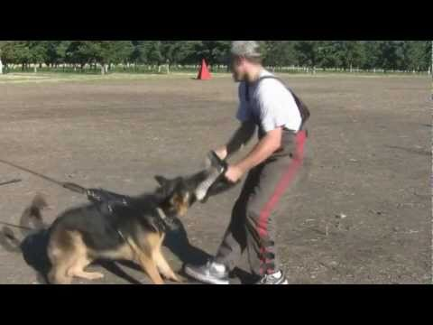 3 Handle Targeting Bite Wedge:  Police K9 & Schutzhund