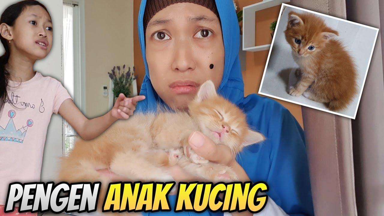 Aqilla Punya Kucing Eh... Mbak Kunyit Juga Pengen Anak Kucing ♥ Aqilla's Diary