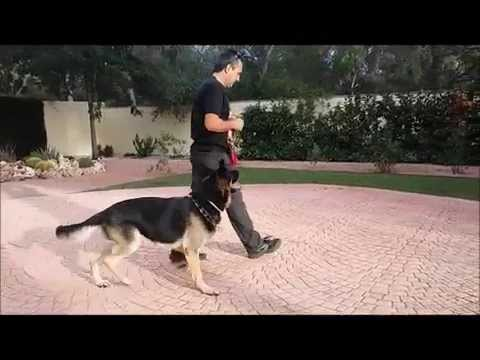enseñando-a-un-perro-a-quedarse-quieto.-adiestramiento-canino.