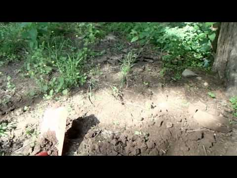 Metal detecting middle Tennessee