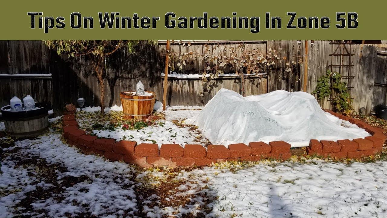 Tips On Winter Gardening In Zone 5b Youtube