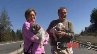 Lila Purebred Bichon Dog And Matisse A Schnoodle (schnauzer Poodle Mix)