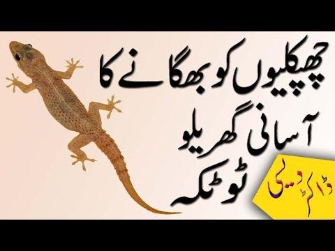 chipkali bhagane ka tarika in urdu | gharelo totkay in urdu | چھپکلیوں کو گھر سے بھگانے کا طریقہ