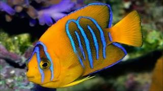 World's 10 Most Costly Aquarium Fish