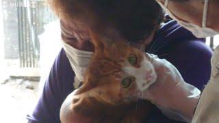 行方不明のネコと飼い主が3日ぶりに再会 福島・いわき