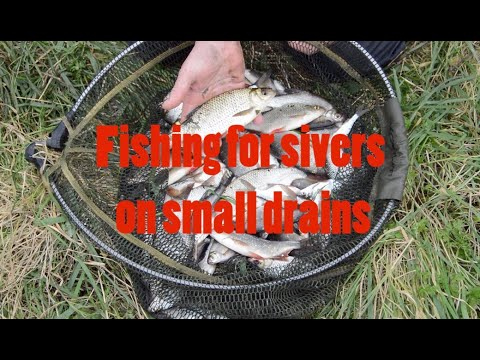 Float Fishing For Roach And Rudd On The Somerset Levels (small Drains)