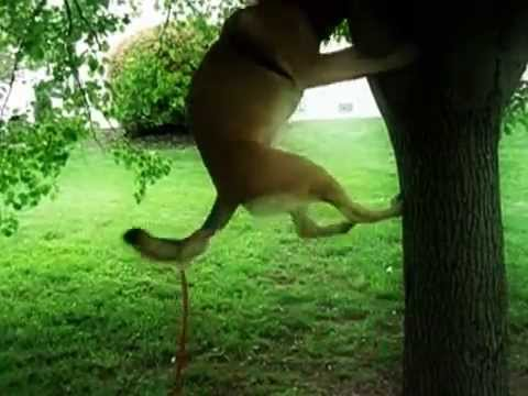 Really Determined Dog Gets His Own Stick Out of Tree