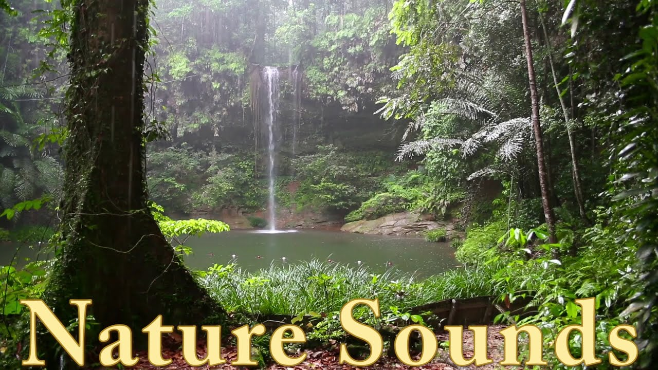 Tropical Island Beach Ambience Sound: Rainforest Animals, Waterfall And Rain