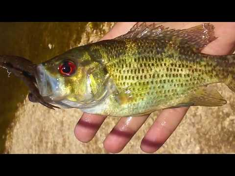Oklahoma spring fed creeks and rivers fishing for rock bass / smallmouth bass using my favorite lure