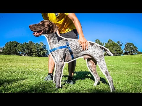 How to choose the Best Dog Collar | REVIEW