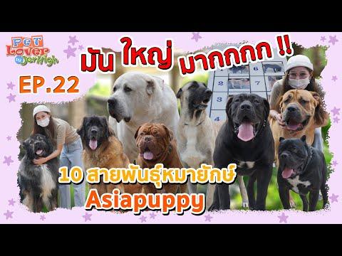 Pet Lover by Jerhigh | EP.22 | 10 สายพันธุ์หมายักษ์ Asiapuppy ตอนที่ 1