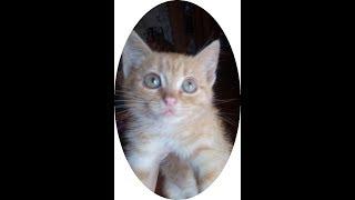 Глазастая красотка - котенок Лёля в добрые руки!