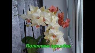 Уход за орхидеей: как полить орхидеи Phalaenopsis, летом, в сильную жару(Как я поливаю свои Phalaenopsis когда за окном +30. Делюсь своим опытом. Все мои видео о цветах : https://www.youtube.com/playlist?list..., 2014-06-10T12:19:52.000Z)