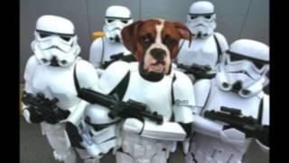 STAR WARS - The Battle of the Front Room (Princess Malia & Darth Bruno)